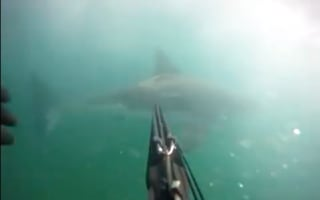 Spearfisherman catches great white shark attack on camera