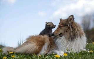 Orphaned fox cub bounces back to health thanks to caring dog