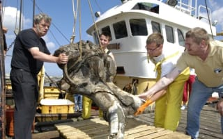 40,000-year-old woolly mammoth skeleton found in North Sea