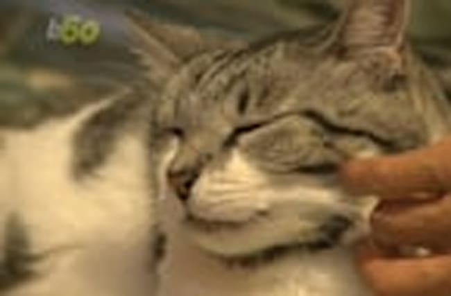 Cat Cuddling Is Now an Actual Job