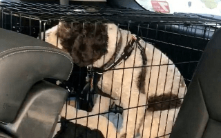 Animal lover smashes car window to help suffering dog