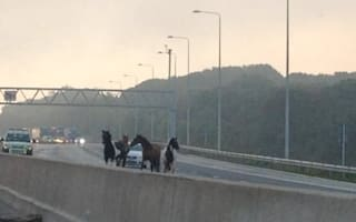 Night-mare: Four horses bring traffic to standstill on M25