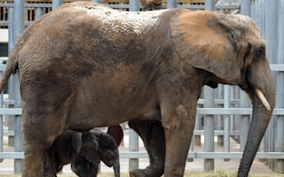 Elephant escapes from circus and kills pensioner in France