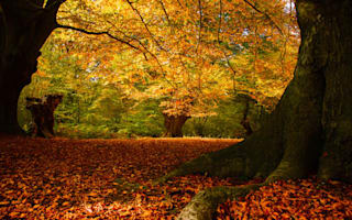 Epping Forest trees at risk from killer disease