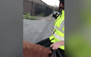 Teenage horse rider teaches driving instructor a lesson on road rules