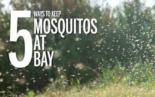 How to avoid being bitten by mosquitoes