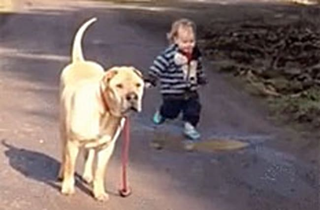 Watch: Patient pooch waits for tot to enjoy splashing in puddle