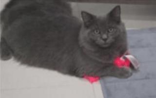 Cat steals woman's underwear