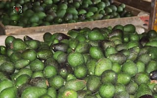 Trio accused of stealing £235k of avocados