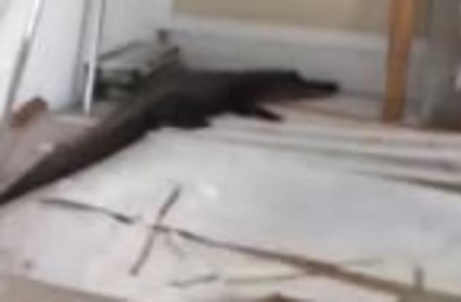 Garage No Place for a Gator