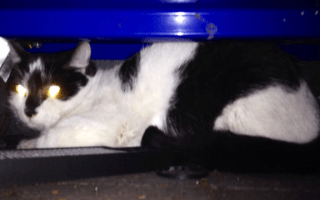 Stowaway cat gives service centre staff a scare