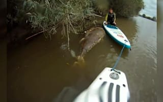 Shark-sized tuna found in River Severn
