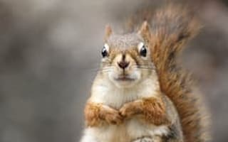 Squirrel causes £7,000 worth of damage to magistrate's living room