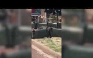 Crocodile on the loose? Build a wheelie bin barricade