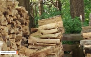 Can you find a cat in the stack of logs?