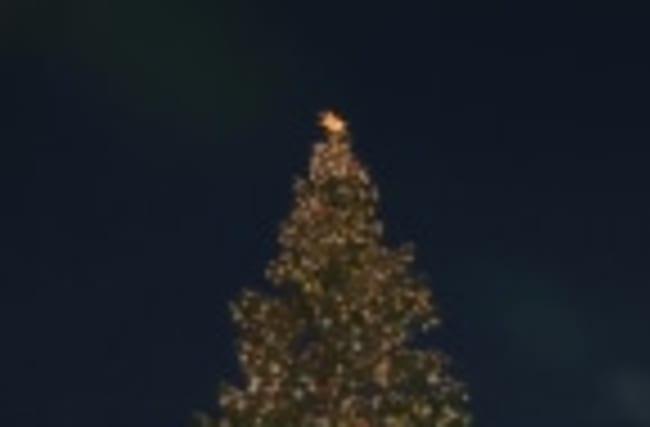 Vatican lights up Christmas tree
