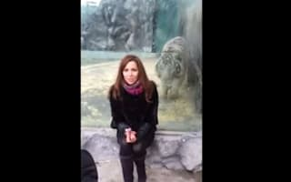 Tiger flings itself at woman in Russian zoo