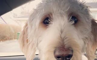 Airline loses dog after putting it on wrong flight