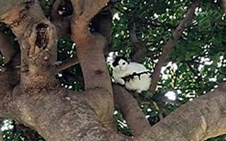 Cat up a tree armed with rifle: Police investigate