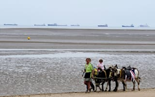 Donkeys could disappear from British beaches after attack by cruel thugs