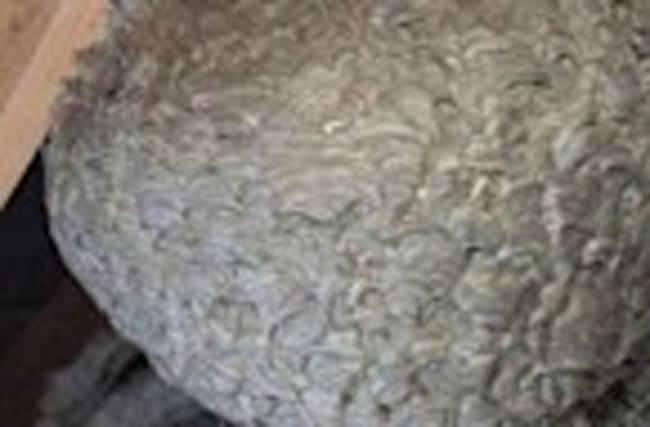 Huge Wasp Nest Found In UK Home