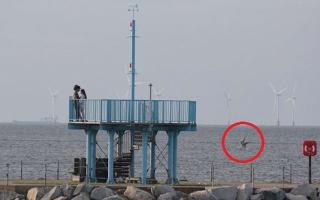 Identity of bizarre 'sea creature' in photograph revealed?