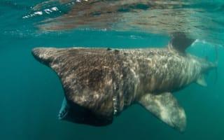 Britain's amazing sea life (pictures)