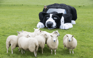 Farmer modifies car to look like sheepdog, sheep oblivious