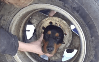Firefighters rescue dog from wheel using coconut oil