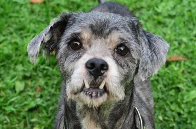 Creepy dog with 'Dracula fangs' is looking for a new home