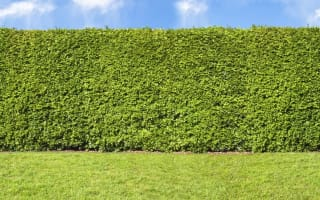 Couple ordered to hack their hedge back after 16-year row