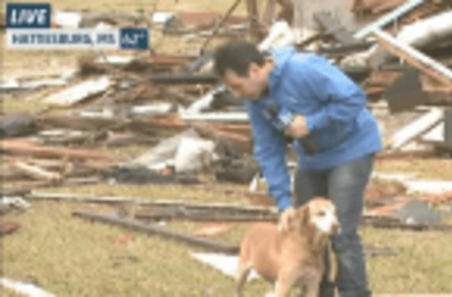 Dogs Investigate Tornado Debris in Mississippi