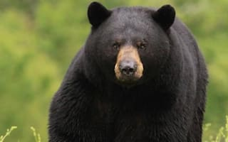 Video showing hunter killing bear with spear sparks outrage