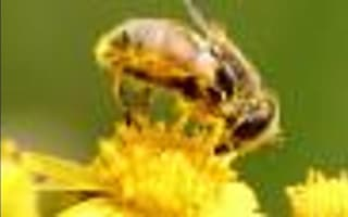 Common allergies - what you need to know