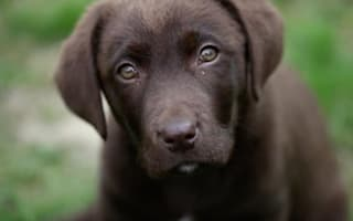 Adult dogs don't like 'puppy talk'