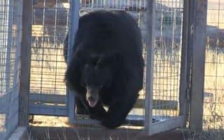 Bear held in roadside zoo for 10 years is finally released