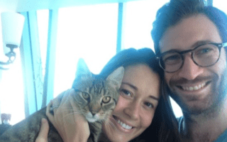 Cat lost after flight from Abu Dhabi to New York