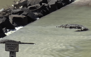 Man eaten by crocodile at notorious Australian river crossing