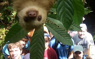 Say cheese: Sloth 'photobombs' school kids' holiday pic in Costa Rica