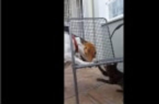 Unusual friendship between dog, cat and rat