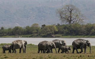 28 forest elephants massacred in Central Africa