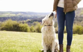 Dog owners urged to use 'stick and flick' instead of poo bags