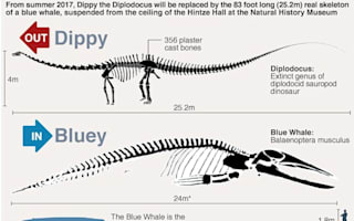 Supporters campaign to save Dippy the diplodocus