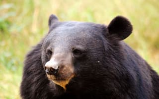Japanese man fights off bear with karate