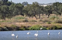 Birds & Nature Tours