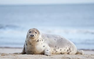 Over 700 seals found in first ever Thames Estuary land, sea and air count