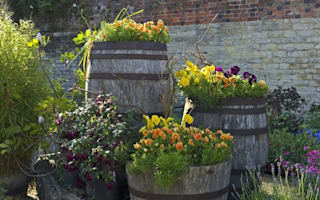 Britain's favourite flowers revealed