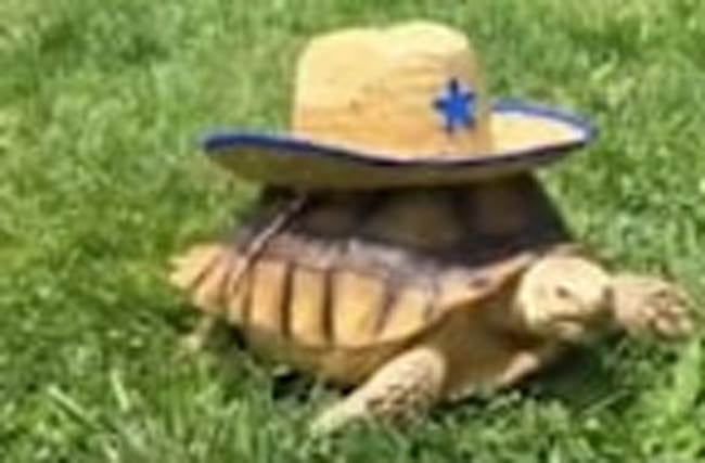 Meet the Most Famous Tortoise in NYC