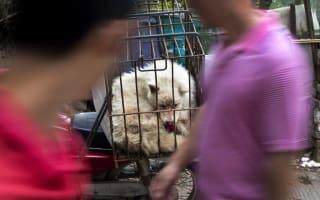 China's dog meat festival begins despite protests