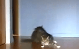 Cat drifting: the web's latest video craze